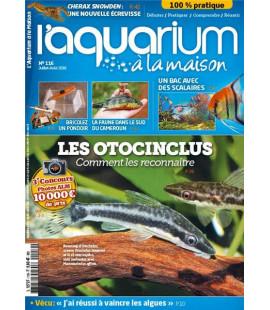 Aquarium à la maison n° 116...