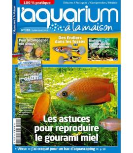 Aquarium à la maison n° 110...