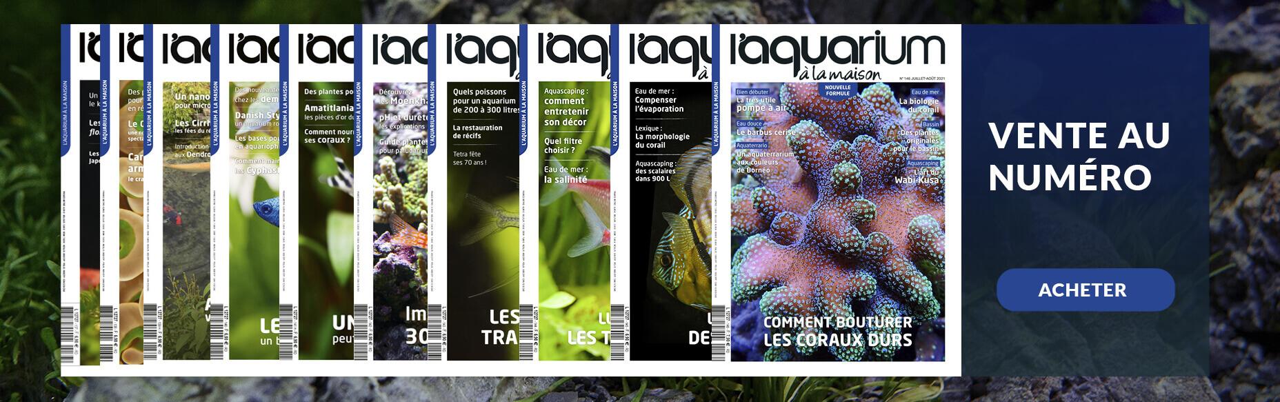 Visuel-Magazines.jpg