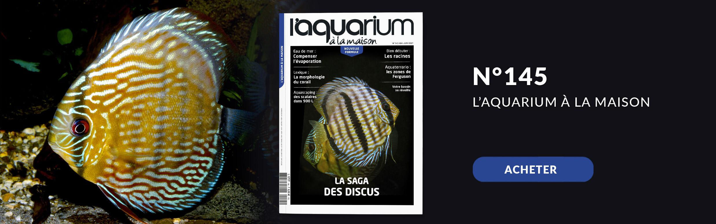 Découvrez la nouvelle formule de l'aquarium à la maison avec le nmr 144