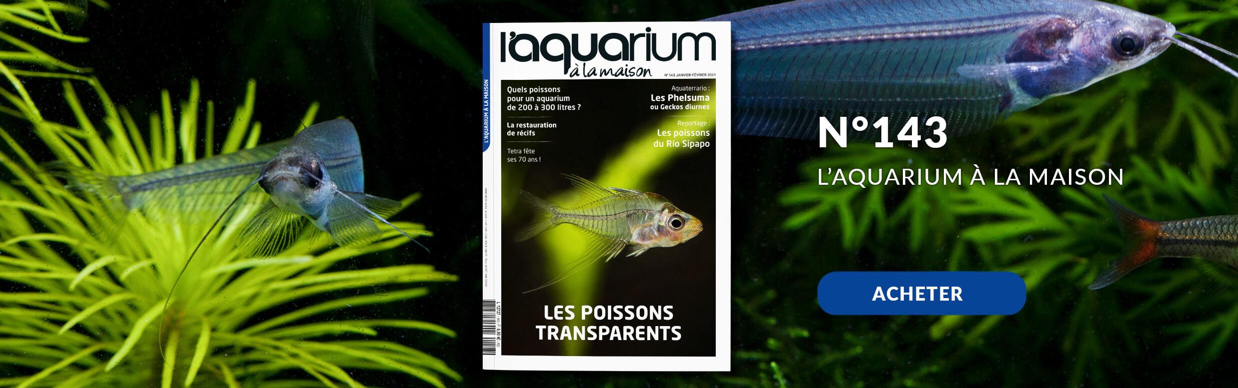 Découvrez la nouvelle formule de l'aquarium à la maison avec le nmr 143