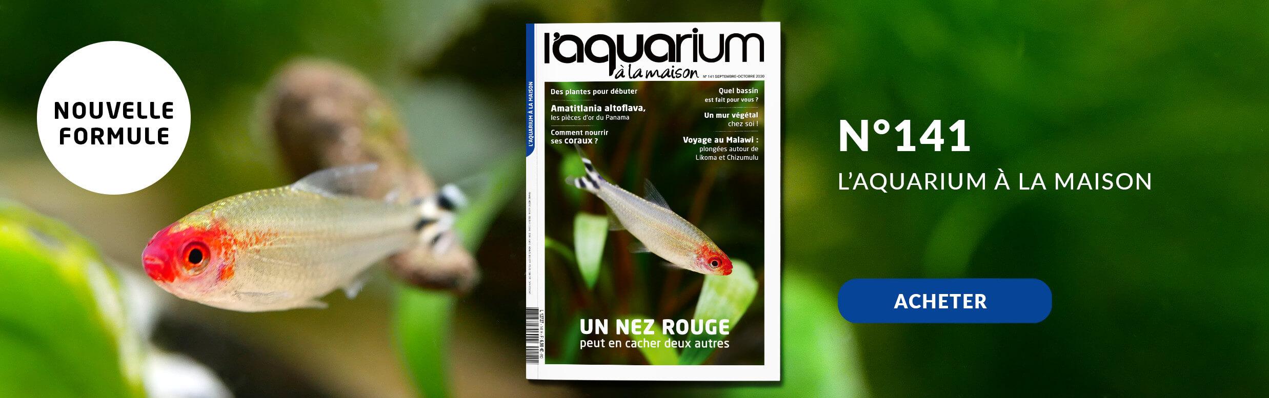 Découvrez la nouvelle formule de l'aquarium à la maison avec le nmr 141