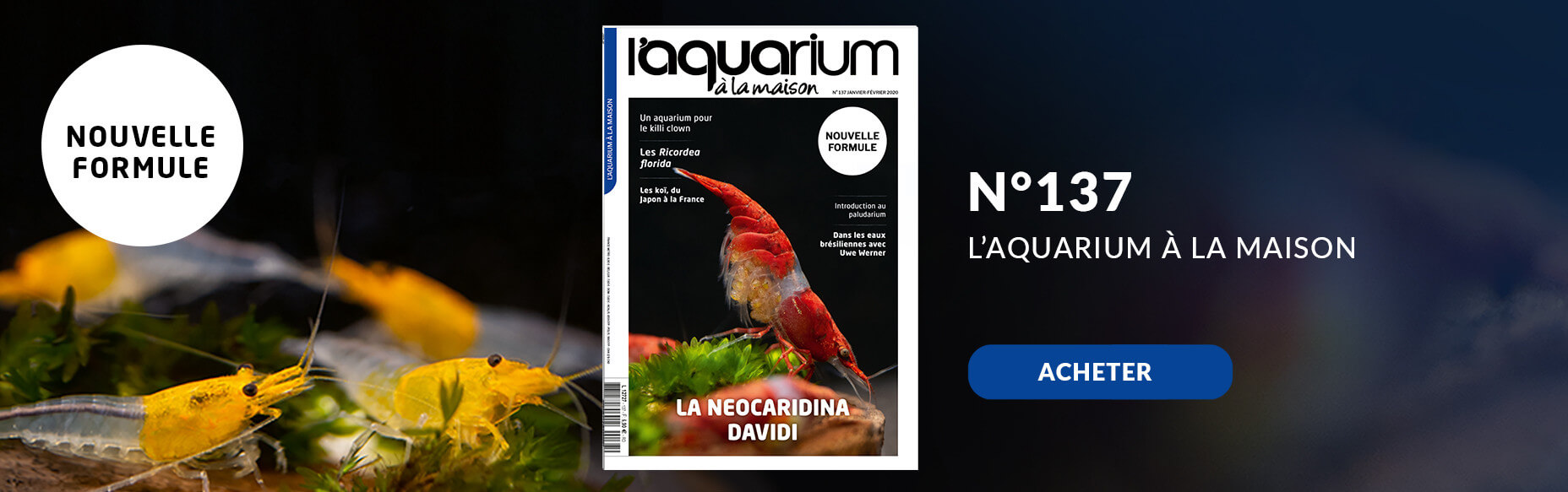 Découvrez la nouvelle formule de l'aquarium à la maison avec le nmr 137