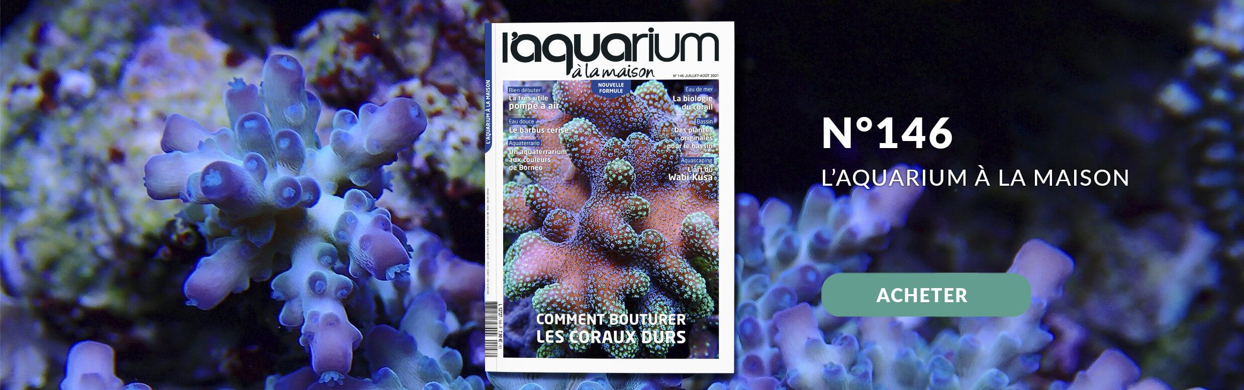 Découvrez la nouvelle formule de l'aquarium à la maison avec le nmr 146