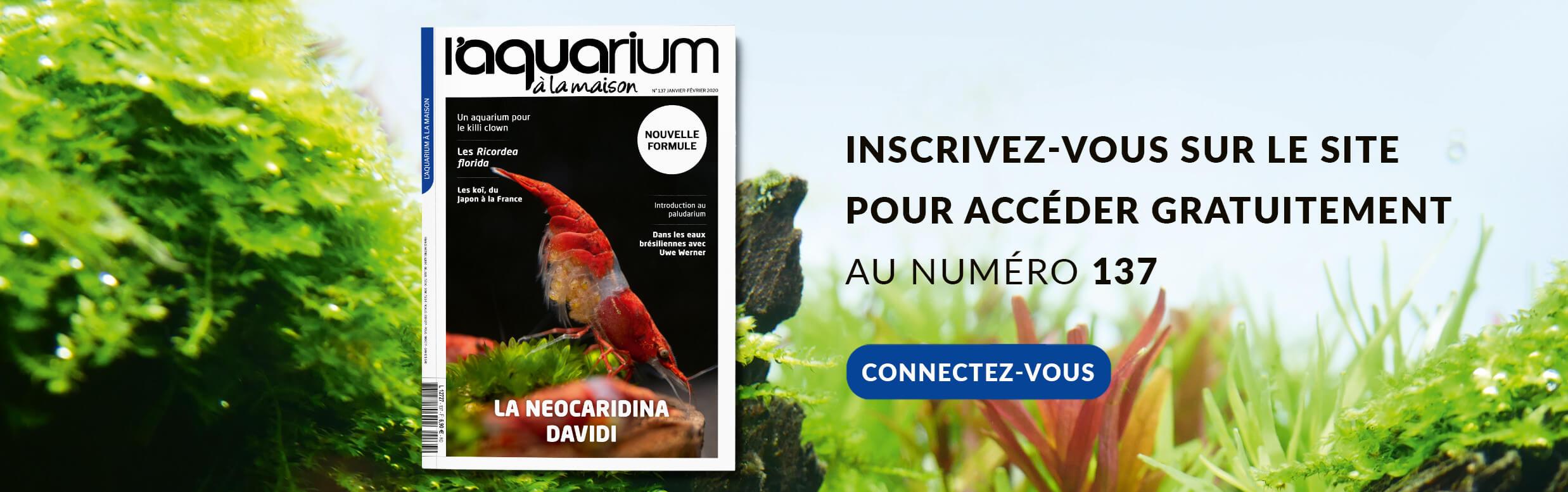 Découvrez le Numéro 137 du magazine, le premier dans sa nouvelle formule ! Bonne lecture !