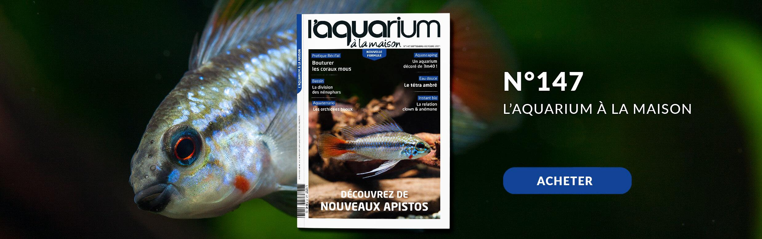 Découvrez la nouvelle formule de l'aquarium à la maison avec le nmr 147